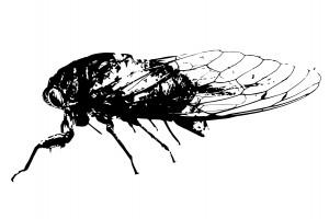 Ali Jackson, Cicada, Degeneration BFA Exhibition, 2015