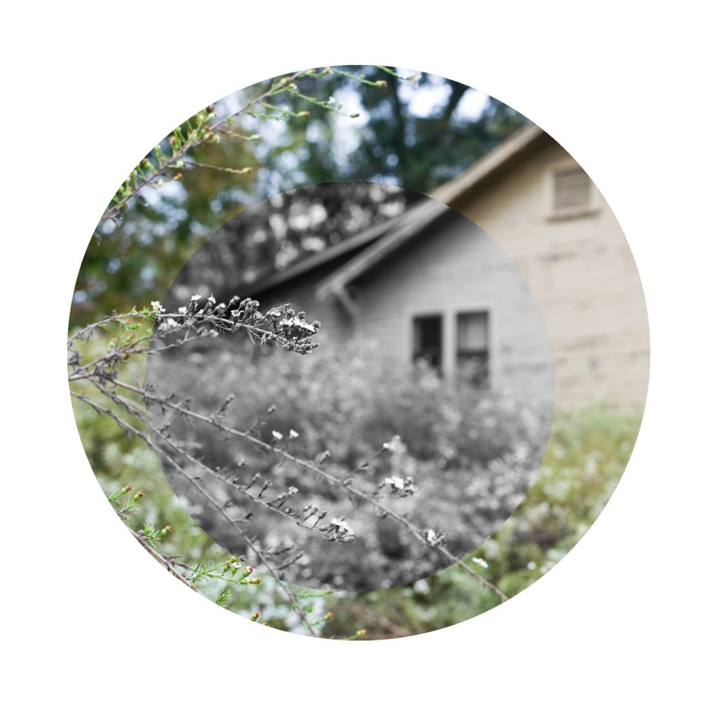 Photo in the round of an old house with overgrown bushes beside it.