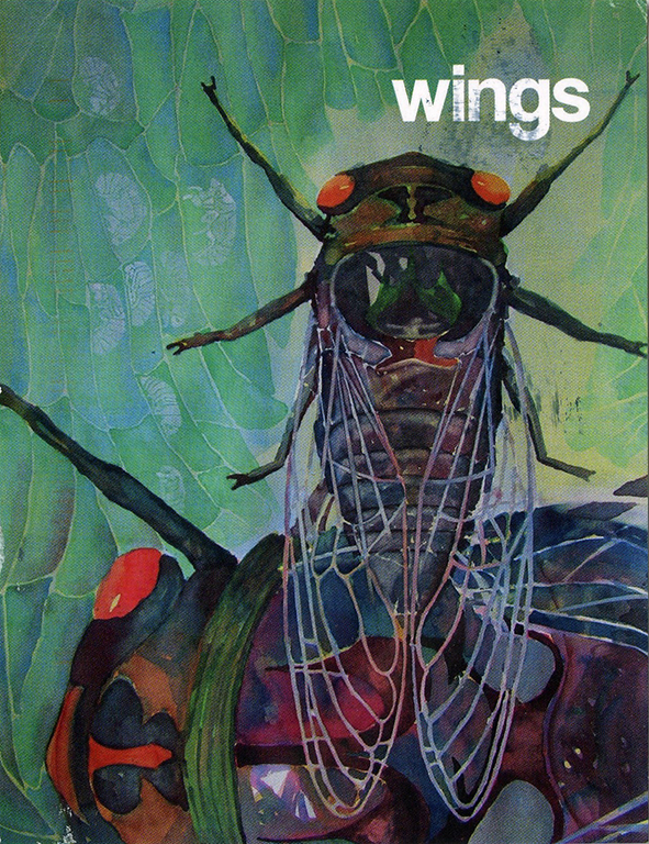 """Kevin Ledgewood, watercolor in his exhibition, """"Wings,"""" in November 2015."""