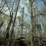 Tim Hursley, Perry Lakes Birding Tower