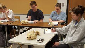 Art students draw animal skulls.