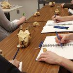 Art students draw animal skulls