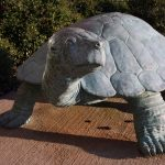 John the Turtle, by Frank Fleming (MFA 1973)