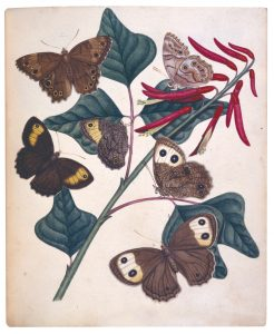 Moths by Philip Henry Gosse